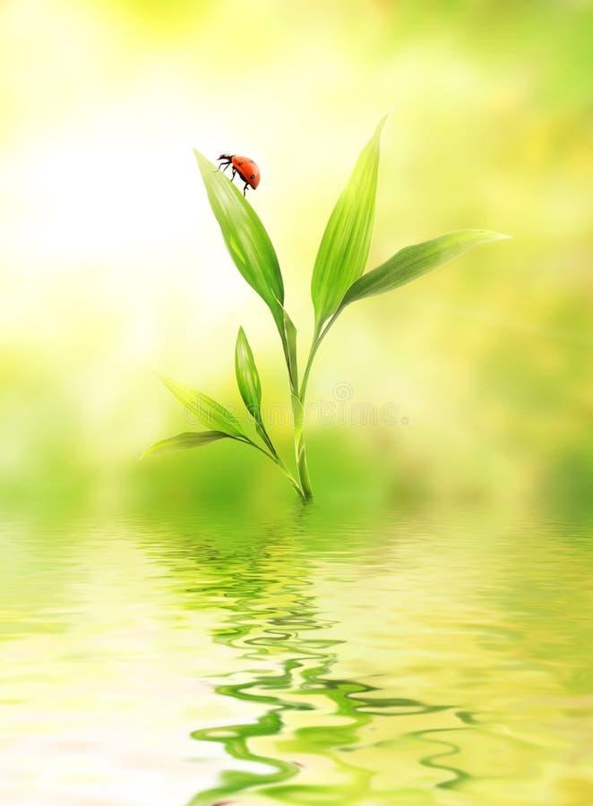 Grünpflanze mit einem Marienkäfer lizenzfreie stockfotos