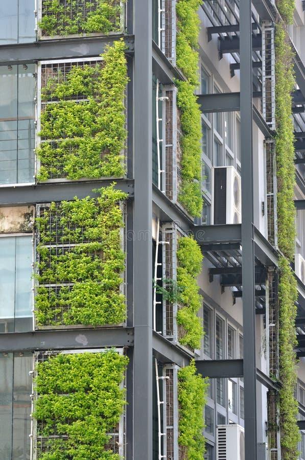 Grünpflanze und modernes Gebäude lizenzfreie stockfotos