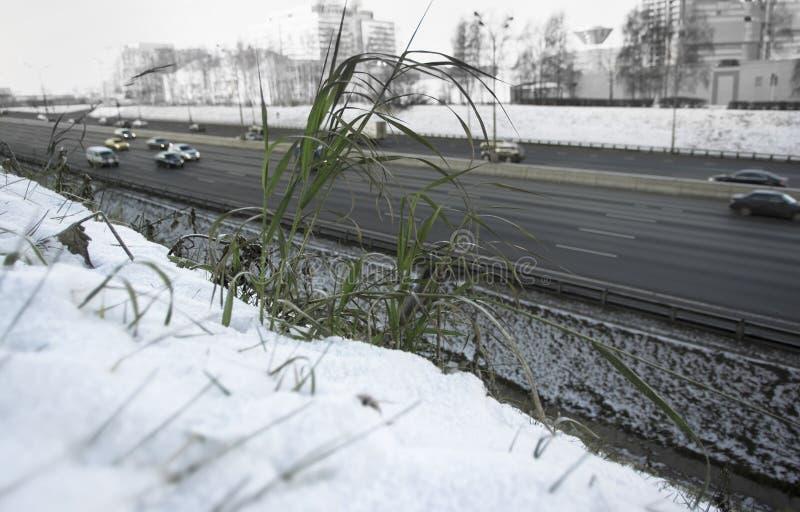 Grünpflanze unter Schnee lizenzfreies stockbild