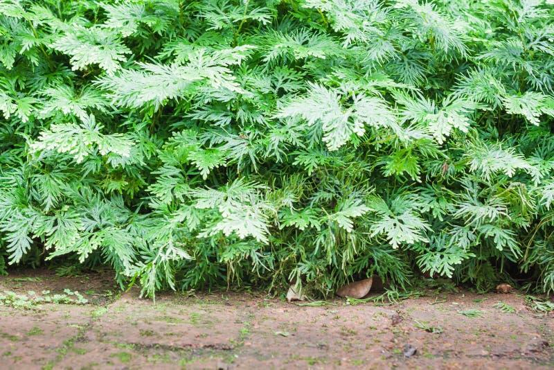 Grünpflanze verziert im Hausgarten lizenzfreies stockbild