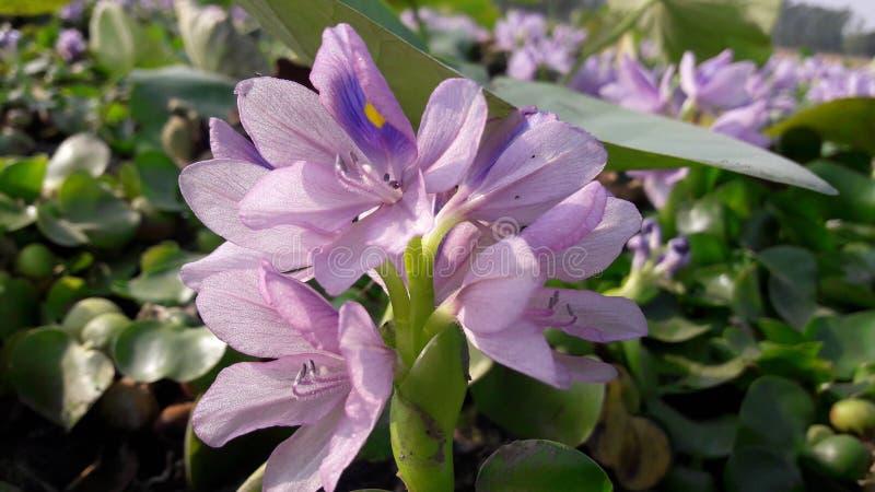 Grünpflanze Vineet Dreamstime stockfoto