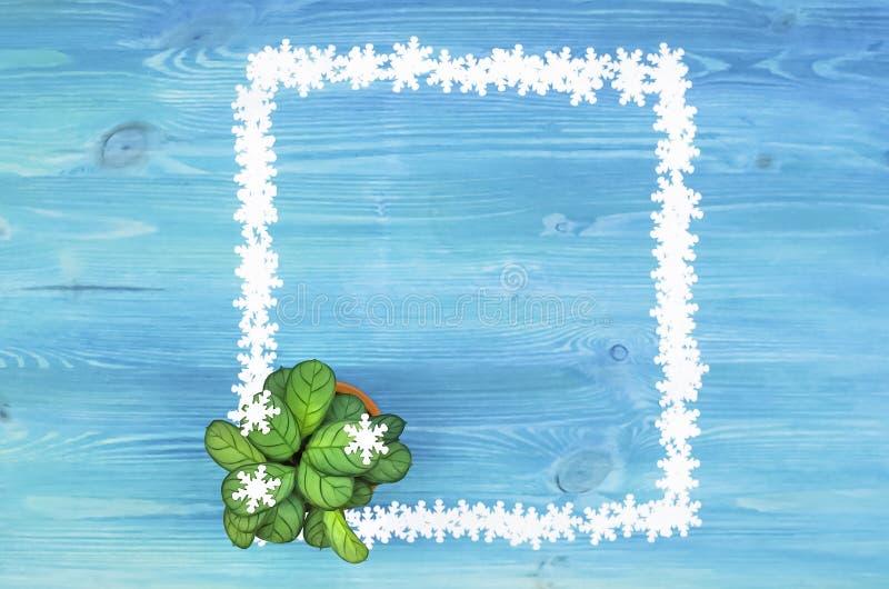 Grünpflanzebaum und -schneeflocken der Pfeilwurz fassen Rahmen mit Kopienraum ein lizenzfreie stockfotografie
