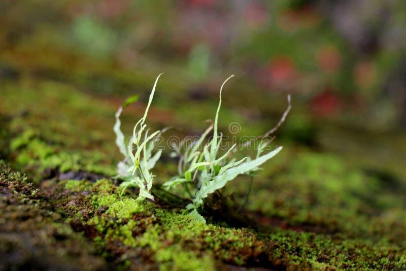 Grünpflanzebiologie stockbild