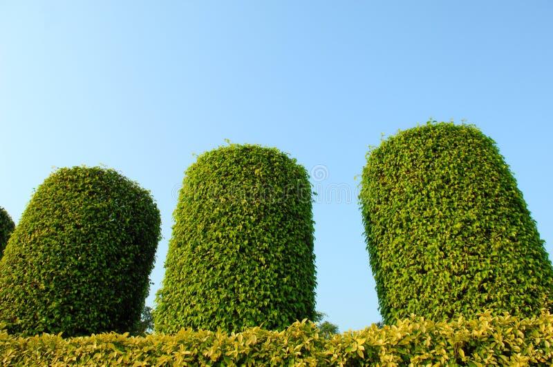 Grünpflanzegarten stockbild