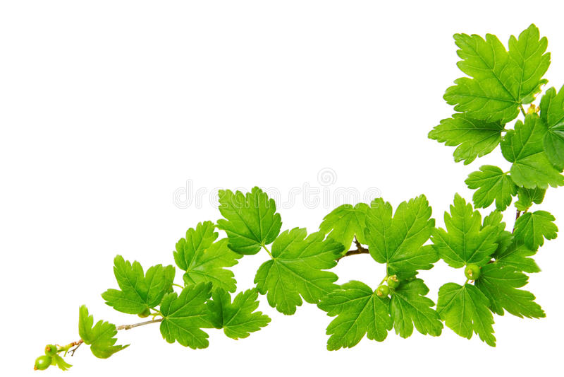 Grünpflanzehintergrund. stockbild