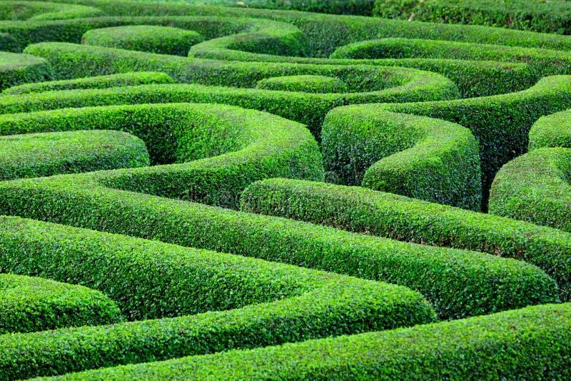 Grünpflanzelabyrinth lizenzfreie stockbilder