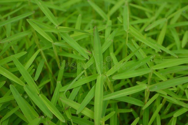 Grünpflanzen, die Hintergrund wachsen lizenzfreies stockbild