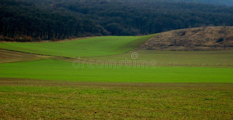 Grünpflanzen, die vom Boden nahe bei dem Wald wachsen stockfotografie