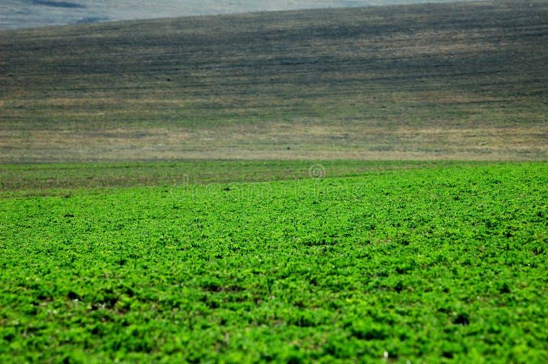 Grünpflanzen, die vom Boden wachsen stockfotos