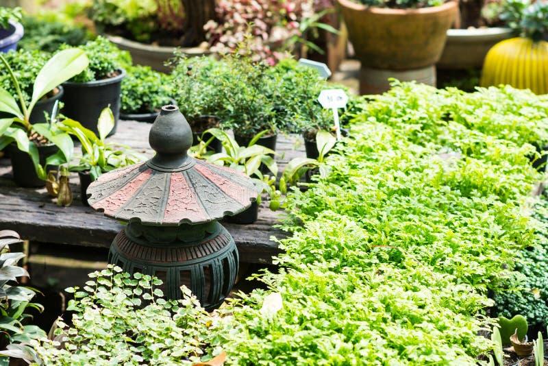 Grünpflanzen im Garten stockbild
