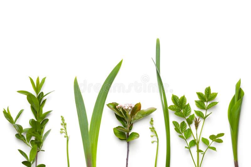 Grünpflanzen lokalisiert auf weißem Hintergrund stockbild