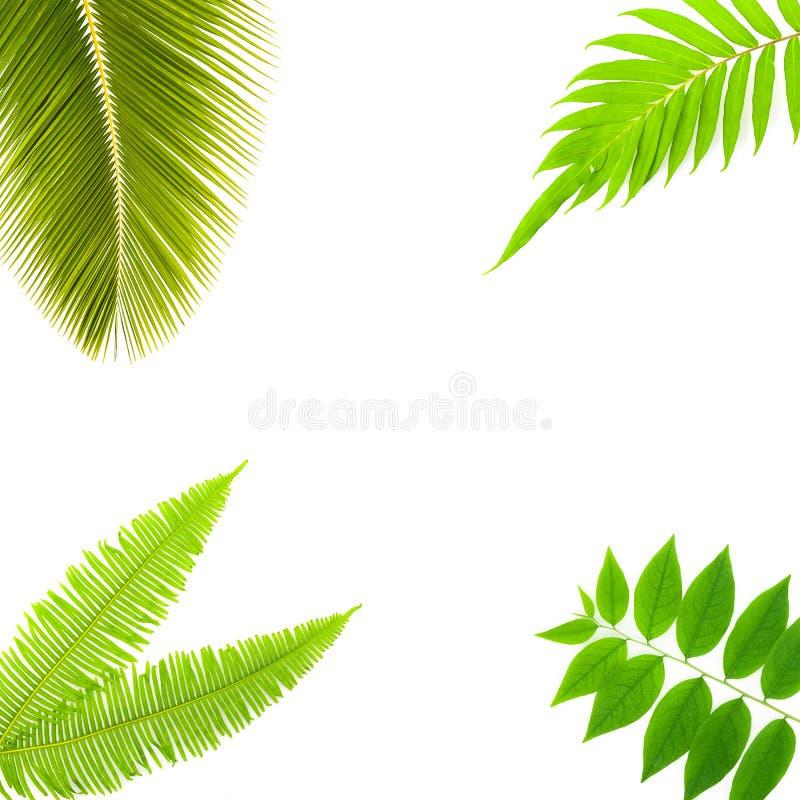 Grünpflanzen lokalisiert auf weißem Hintergrund lizenzfreie stockfotografie