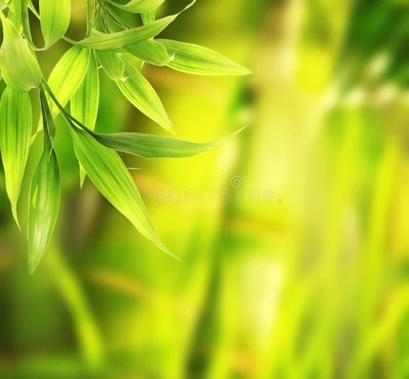 Grünpflanzenahaufnahme stockfoto