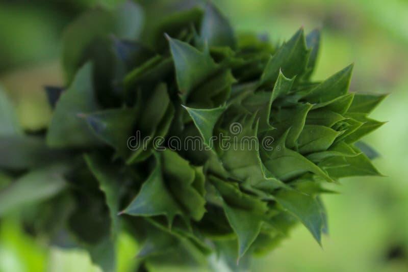Grünpflanzenahaufnahmebild lizenzfreie stockfotos