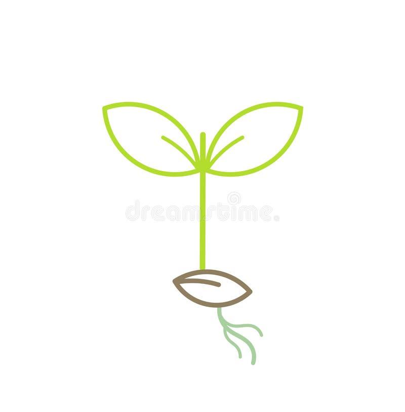 Grünpflanzesämling lizenzfreie abbildung