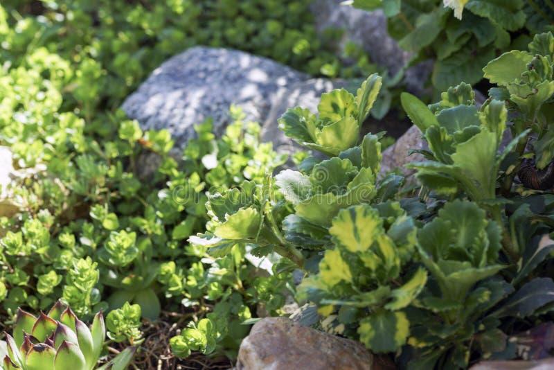 Grüns auf den sonnigen Felsen lizenzfreie stockfotografie
