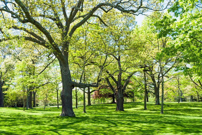 Grüns des Frühlinges stockfotografie