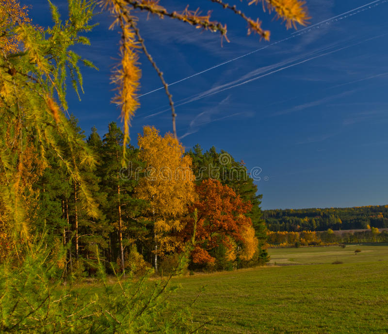 Grünwaldgrasgrün Horsetail des Naturverheerenden feuers wächst Feldhimmel stockfotos