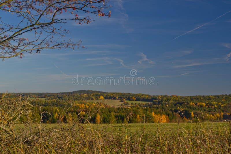 Grünwaldgrasgrün staw Herbsthimmel des Naturverheerenden feuers stockfotos