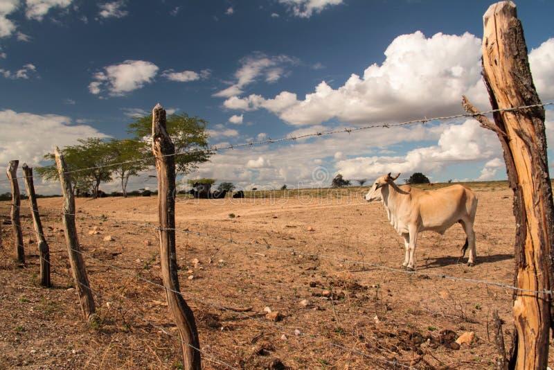 Grże gospodarstwo rolne zdjęcia stock