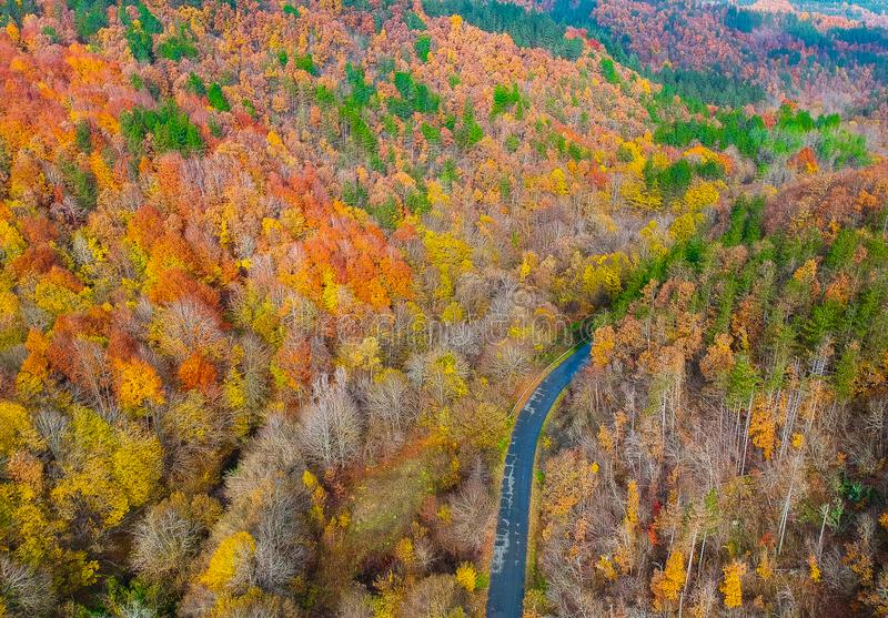 Grże i coziness las obraz stock