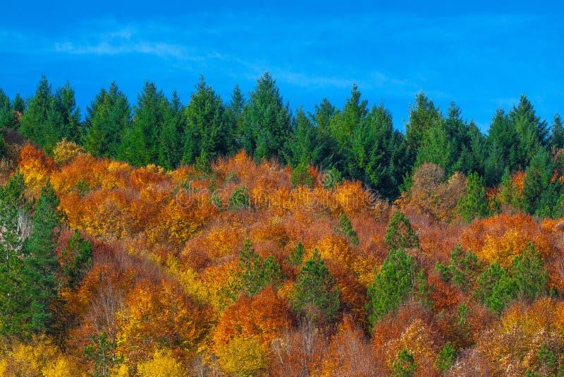 Grże i coziness las obrazy royalty free