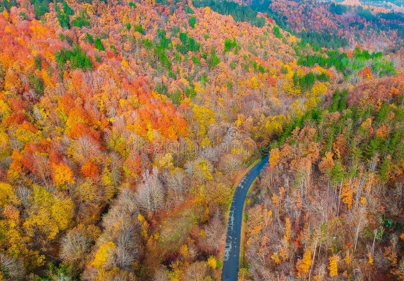 Grże i coziness las obraz royalty free