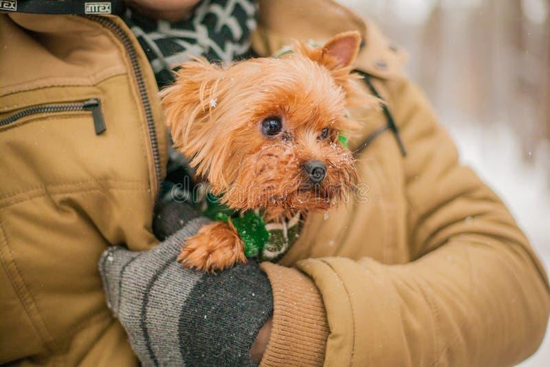 Grże psa pod kurtką w zimie w śniegu opieka dla psa w zimnym sezonie zdjęcia royalty free