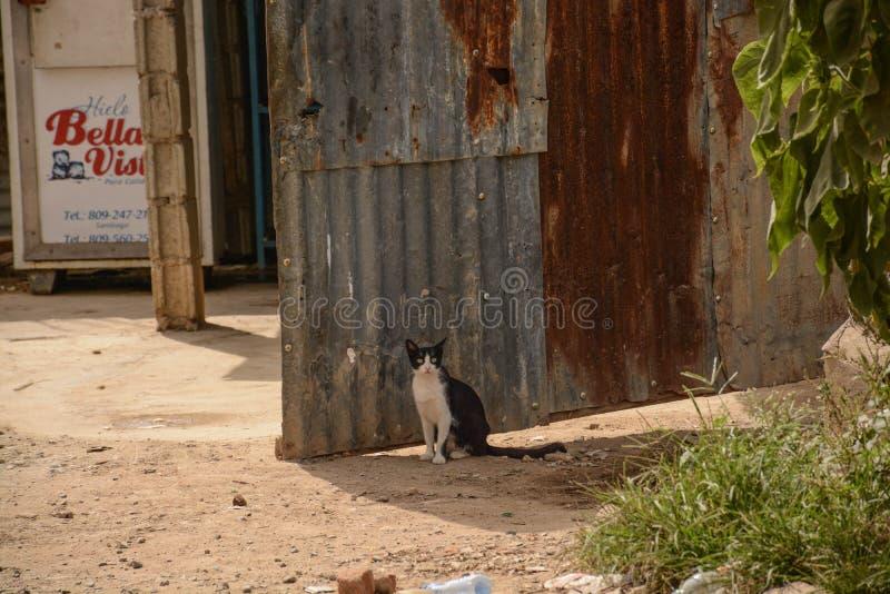 Gr Gato op Prowl royalty-vrije stock afbeeldingen
