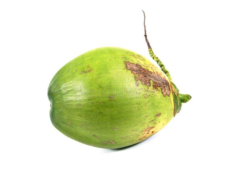 Gr?n kokosn?tfrukt som isoleras p? vit bakgrund Isolerad ny kokosn?t arkivbild