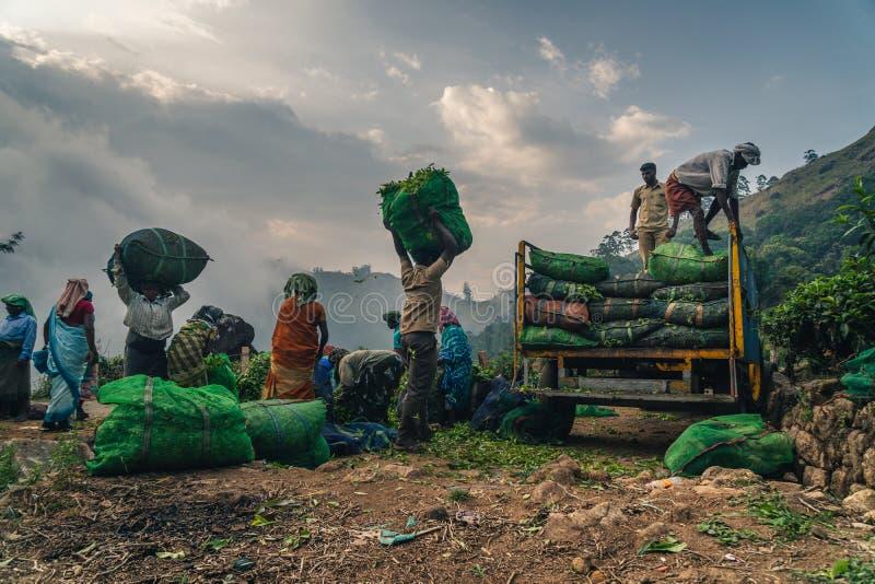 Gr?n Munnar-Teeplantagen-Keralas Indien lizenzfreie stockfotografie