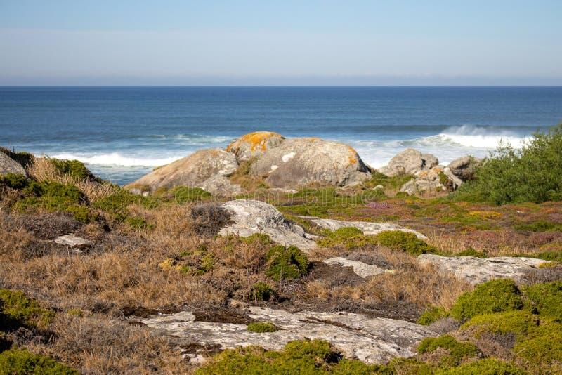 Gr?n och gul mossa och gr?s i stenar p? kusten f?r Atlantic Ocean kustsommar med vaggar och stenar Scenisk seascape royaltyfria bilder