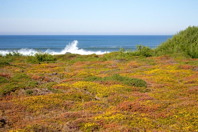 Gr?n och gul mossa och gr?s p? kusten f?r Atlantic Ocean kustsommar med att plaska v?gor p? horisont royaltyfria bilder
