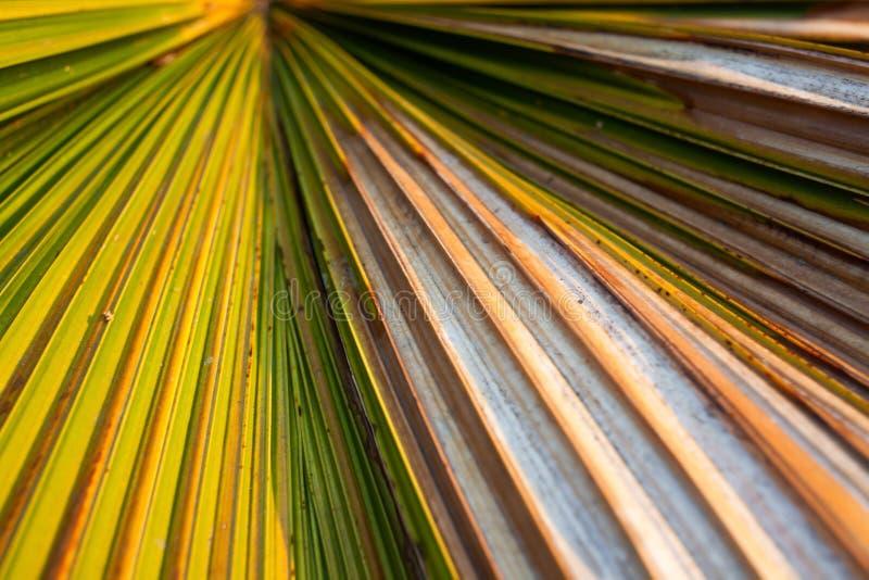 Gr?n palmblad royaltyfri foto
