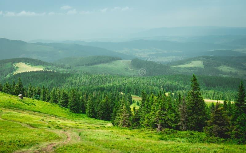 Gr?n skog i bergen arkivfoton