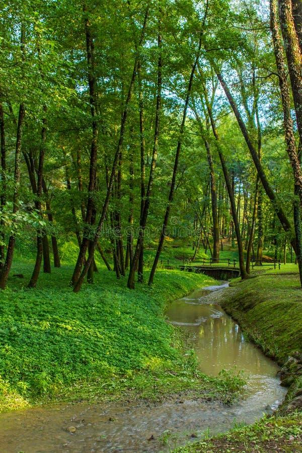 Gr?n skog med floden royaltyfri foto