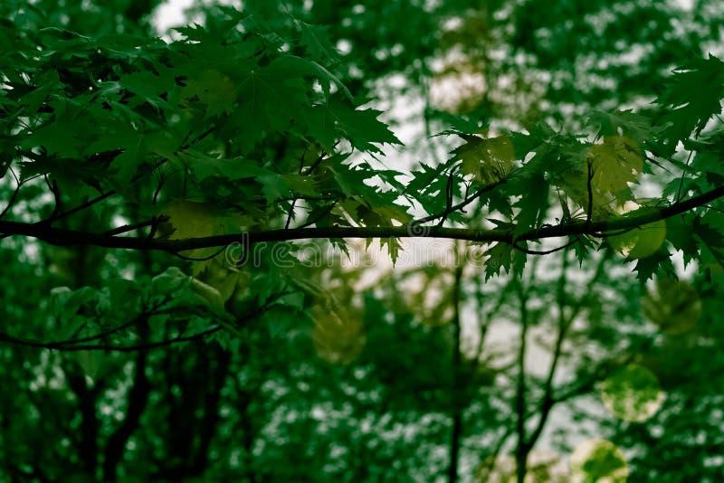 Gr?na blad i natur arkivfoton