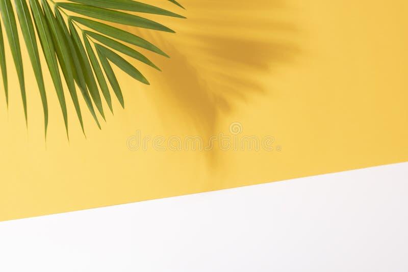 Gr?na tropiska palmblad p? gul bakgrund med solljus L?gger den id?rika l?genheten f?r minsta sommar royaltyfria bilder