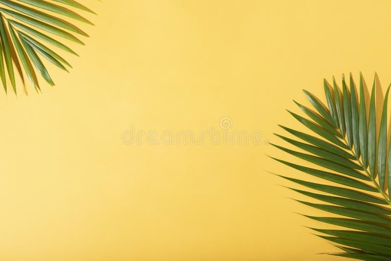 Gr?na tropiska palmblad p? gul bakgrund med solljus L?gger den id?rika l?genheten f?r minsta sommar royaltyfri bild