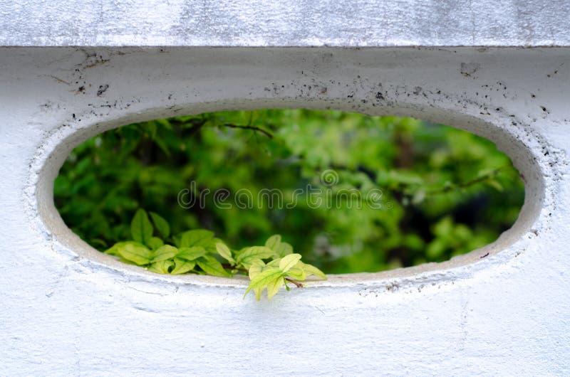 Gr?nbl?tter im Garten lizenzfreie stockfotos