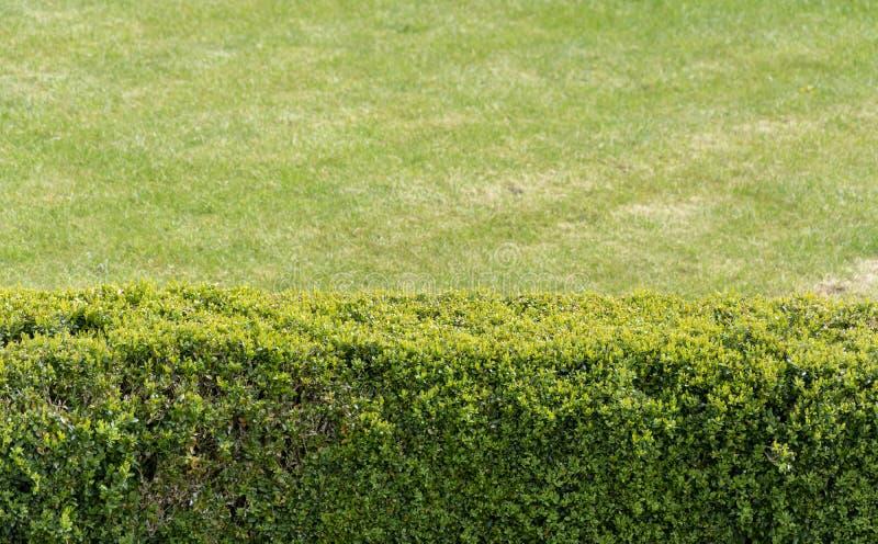 Gr?ne Hecke und Rasen stockbild