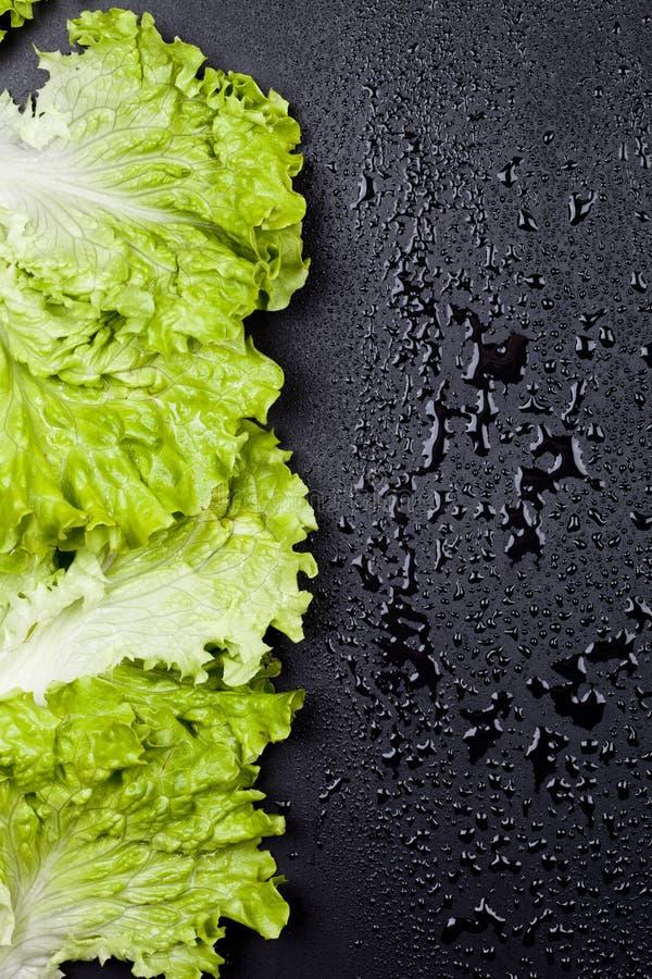 Gr?ner organischer Kopfsalatsalat l?sst Rahmen auf nass schwarzem Hintergrund lizenzfreie stockfotografie