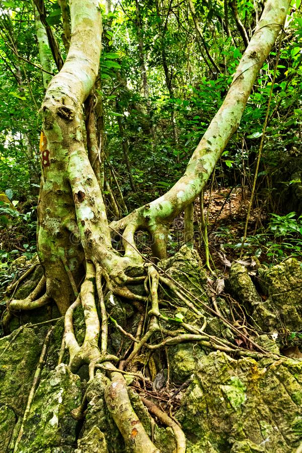 gr?ner Wald der Baumwurzeln lizenzfreie stockbilder