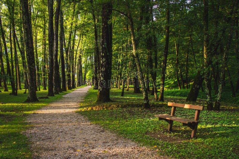 Gr?ner Wald mit Weg lizenzfreie stockfotos