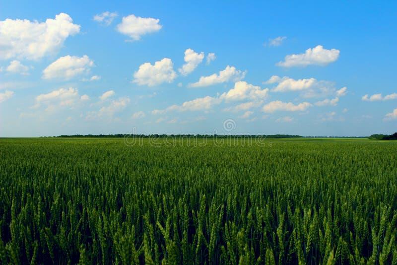 Gr?nes Feld und Hintergrund des blauen Himmels Landschaft, Naturkonzept stockbilder