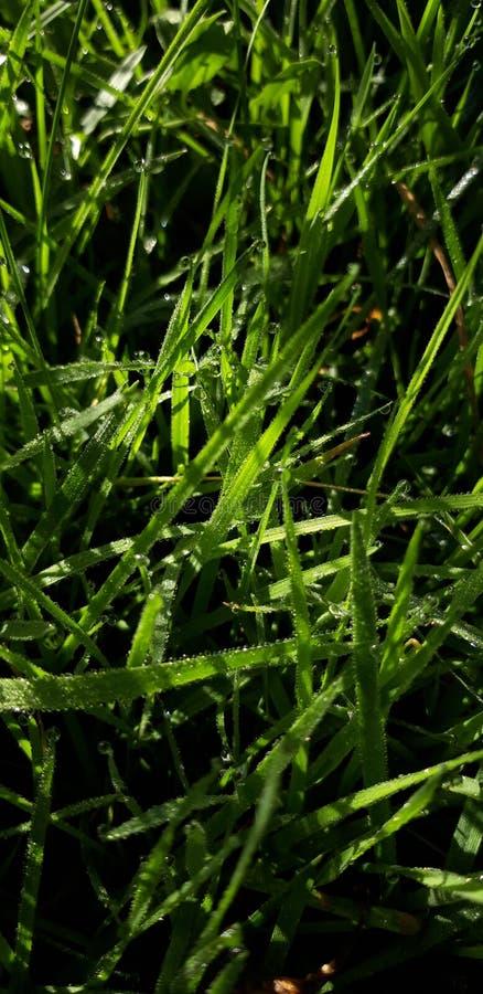 Gr?nes Gras mit Tautropfen lizenzfreies stockbild