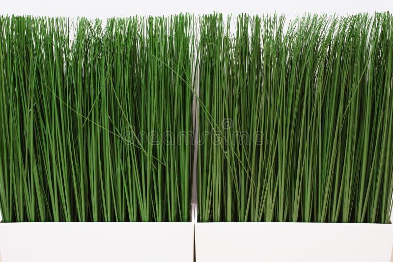Gr?nt konstgjort gr?s p? en vit bakgrund Tunt gräs i en ljus kruka royaltyfri foto
