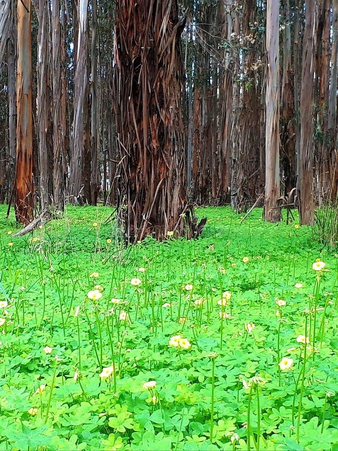 Gr?nt gr?s f?r skog arkivbilder