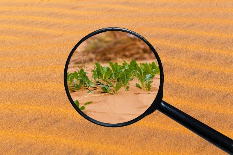Gr?nt gr?s som v?xer till och med sand arkivbilder