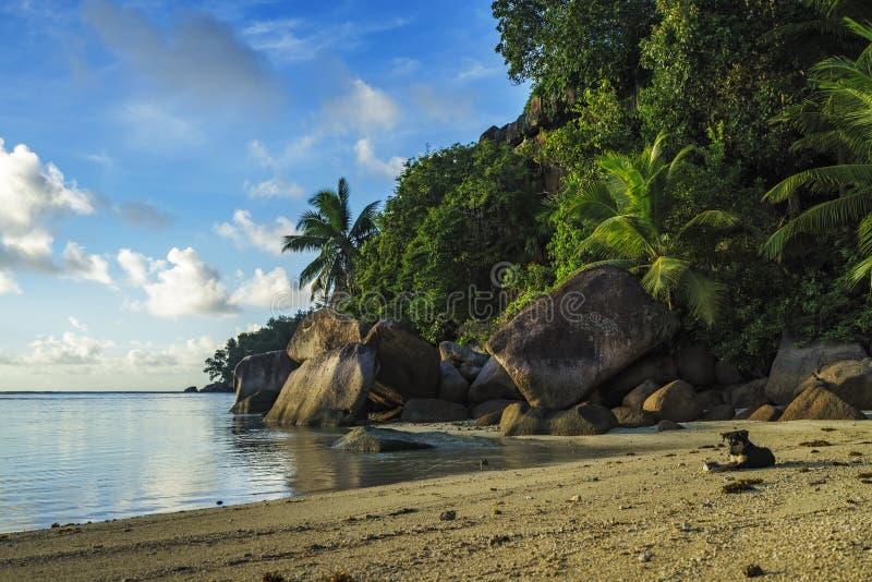 Download Graaf Bij Een Mooi Paradijsstrand Op Seychellen 1 Stock Afbeelding - Afbeelding bestaande uit palm, palmen: 107708225